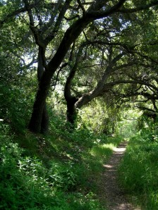 BB Trail - Blue Canyon Trail