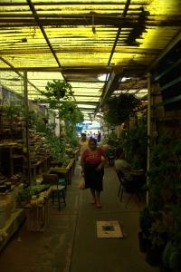 Mercado de Xochimilco 15