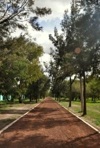 Bosque de Aragon 70