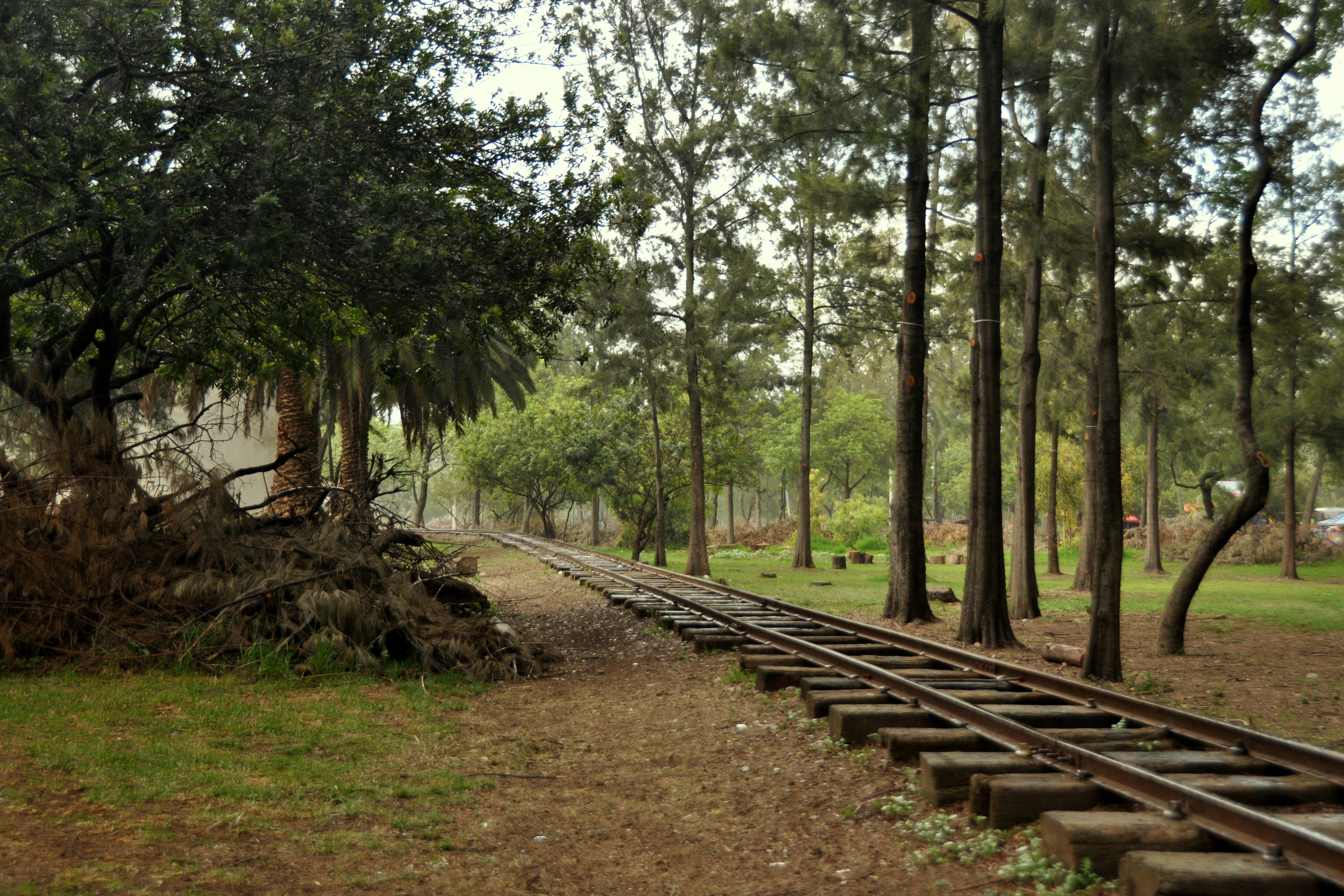 Vista del bosque de Aragón