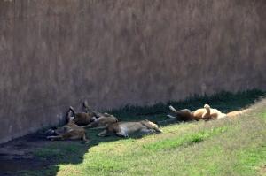 Zoologico San Juan de Aragon 18