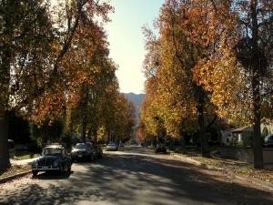 Burbank fall colors - December 2007