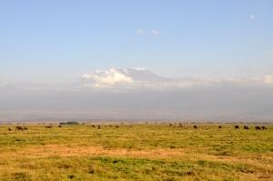 Day 1 Amboseli 77