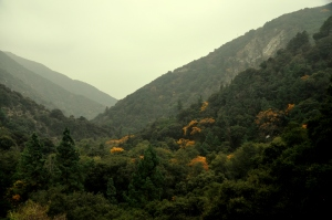 Sturtevant Falls hike - Nov 2011-4