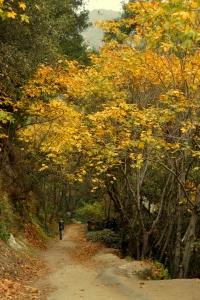 Sturtevant Falls hike - Nov 2011-5