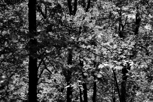GSMNP 8 - filtered black-and-white