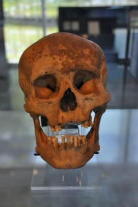 Museo de Tlatelolco 6 - skull of 30-to-35-year-old adult male