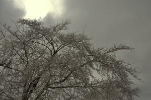 Snowpocalypse 2015-16