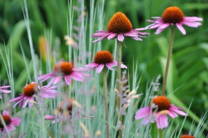 Millennium Park 14 - Lurie Garden