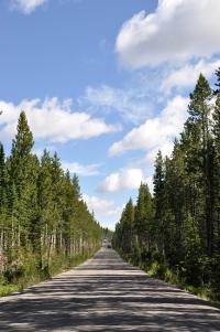 Yellowstone NP 10