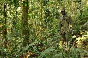 Bwindi gorillas 11