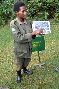 Bwindi gorillas 3