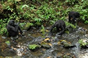 Bwindi gorillas 54