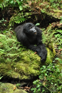 Bwindi gorillas 99