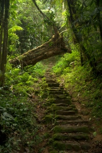 Stairs to Ciudad Perdida 4