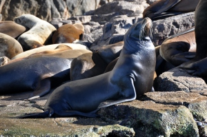 Land's End water taxi ride 25 - sea lion colony