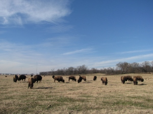 Shelby Farms 1