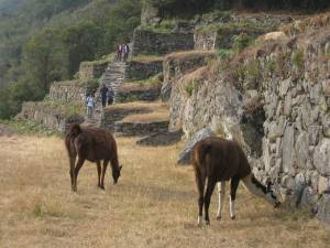 day-4-inca-trail-15