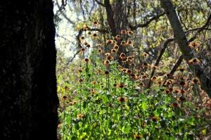 unam-jardin-botanico-1