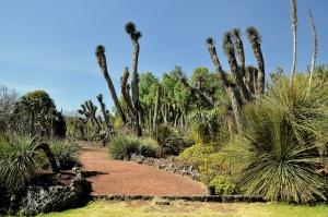 unam-jardin-botanico-3