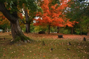dandridge-12-revolutionary-war-cemetery